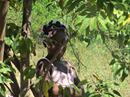 Haiti Trip 1