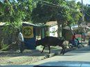 Haiti Trip 12