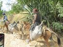 Haiti Trip 2